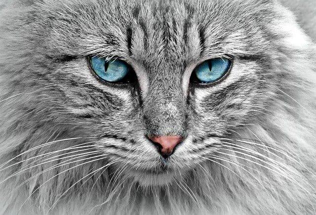 Unfallversicherung vergleichen ob Bisswunde Katze mitversichert ist